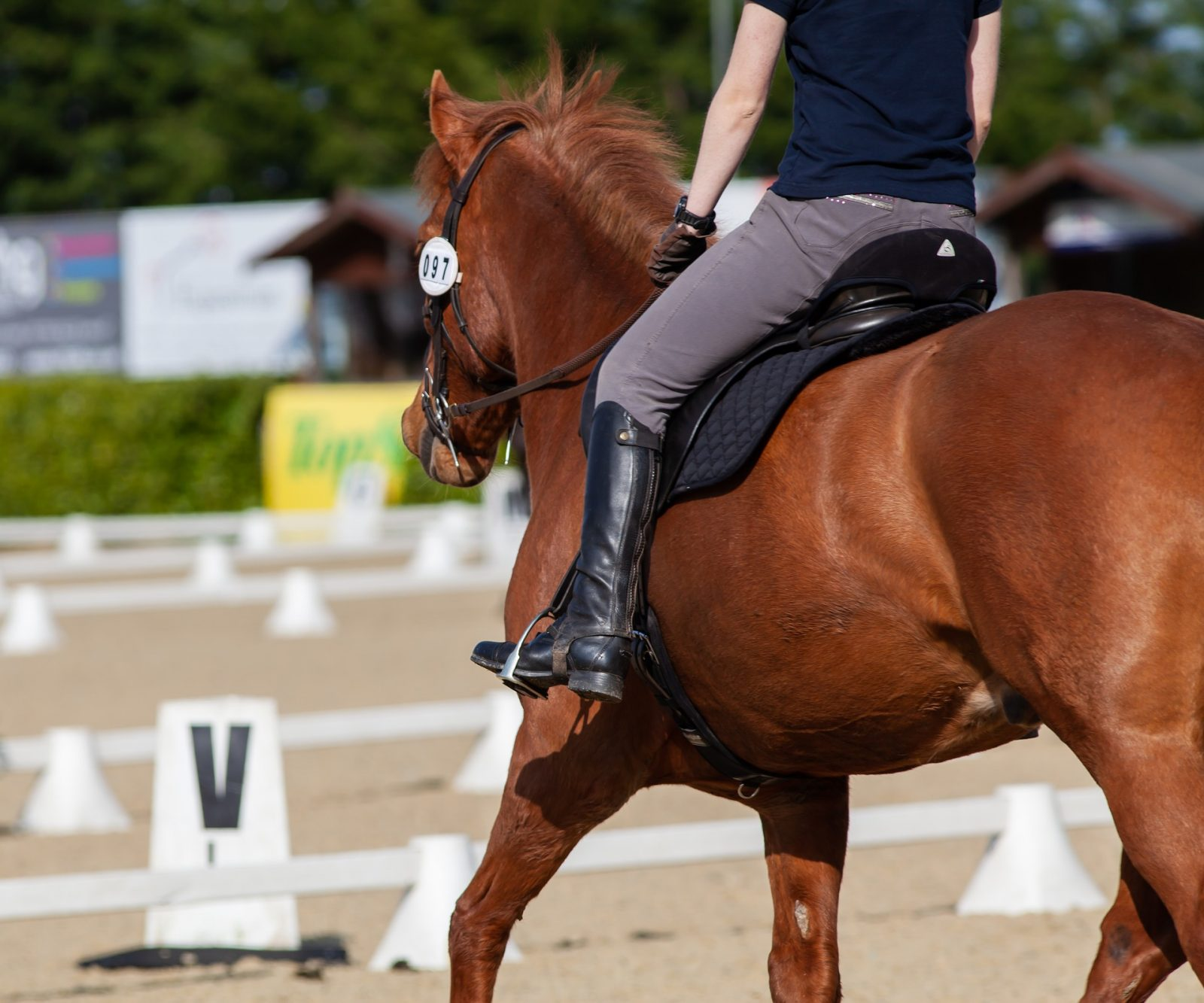 CDIs AND COVID- IMPACT ON WEST COAST DRESSAGE COMPETITIONS